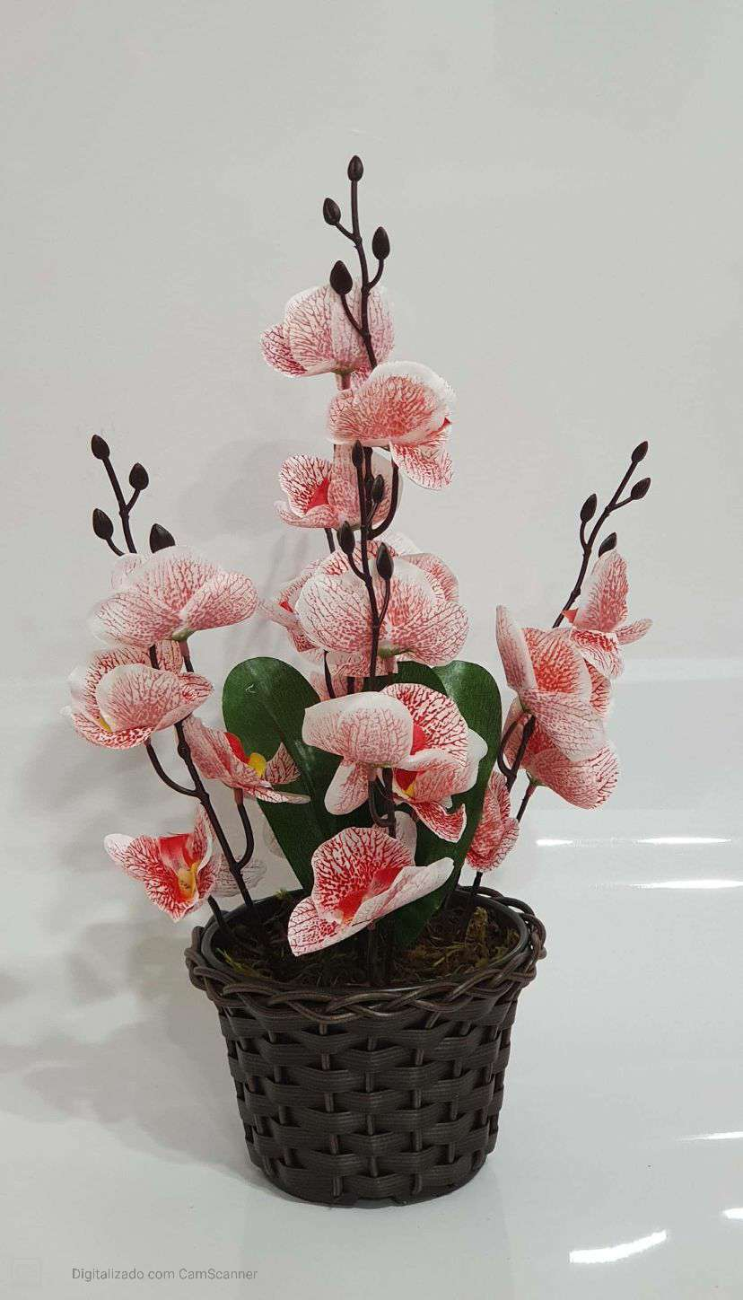 0057 ARRANJO ORQUIDEA RED X5 42X22 - BRANCO COM...